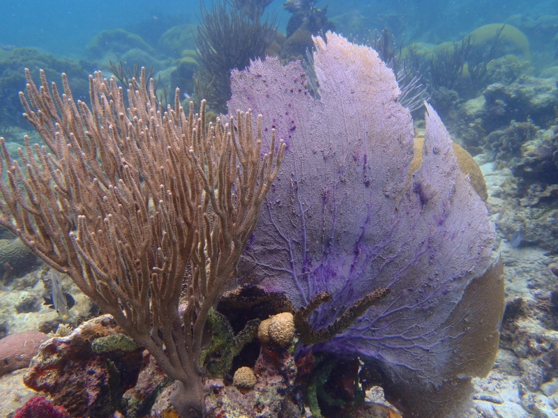 snorkeling in San Blas Islands