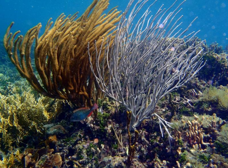 snorkeling in san blas
