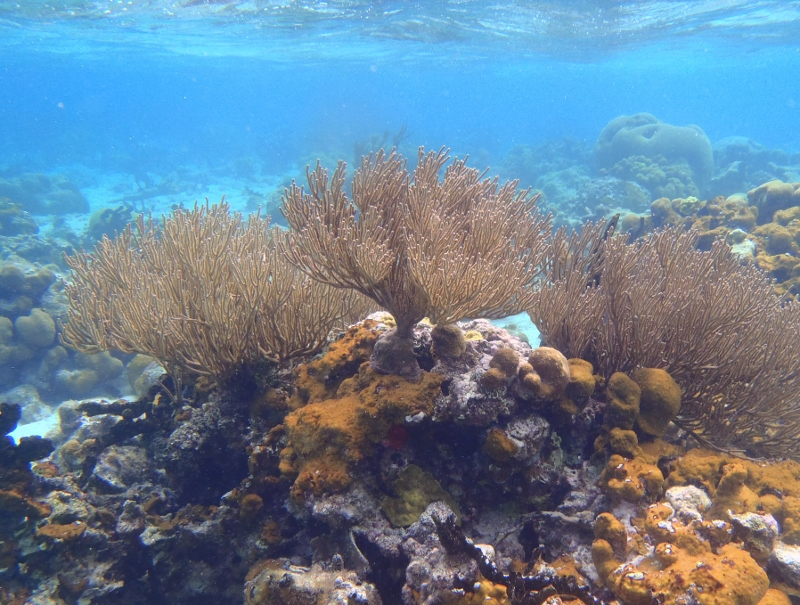 san blas islands coral reef