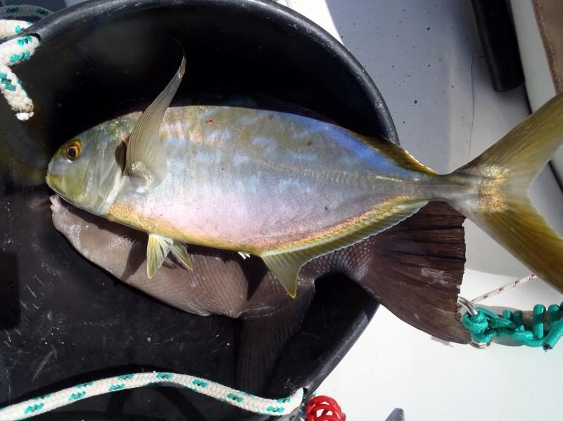fishing in san blas panama